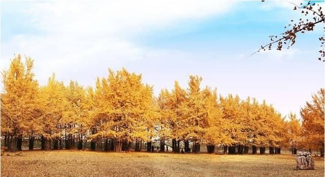 2018 邳州国际半程马拉松赛
