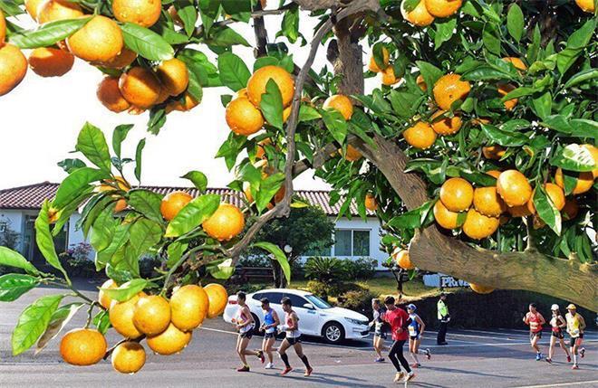 2016济州柑橘国际马拉松