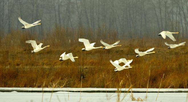 第二届北京野鸭湖冰雪马拉松(半程)