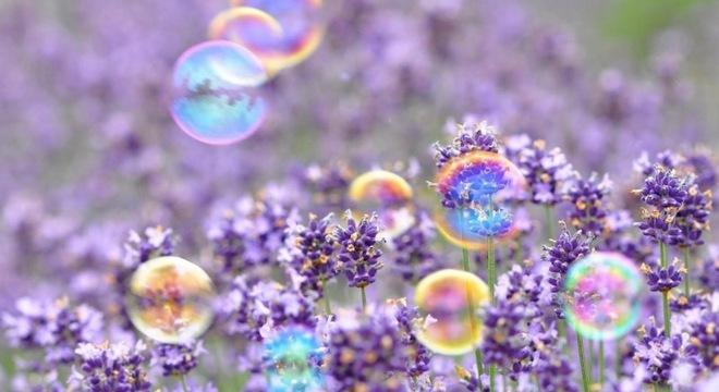 乐逐自然系列赛·春之赏花