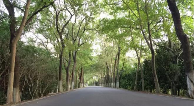 崇明环岛100公里超级马拉松
