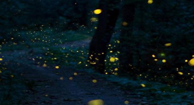 2017 夜听紫金山荧光跑-萨洛蒙越野南京站6月月赛