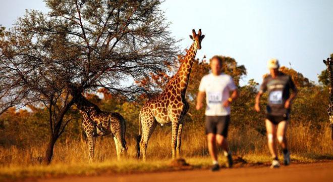 五大野生动物马拉松