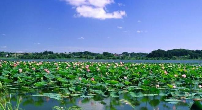 中国山东滕州微山湖湿地马拉松