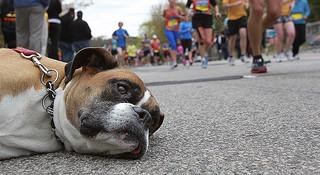 马拉松到底算不算是慢跑呢?我们来做几组对比