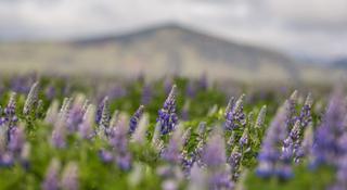 北美超马故事 | 好像花儿开在春风里